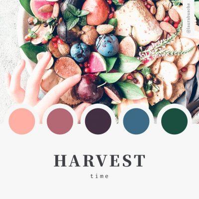 Brand Moodboard: Harvest Time