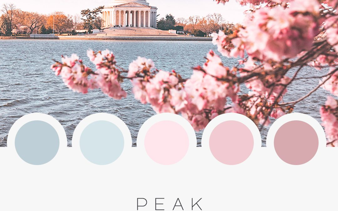 Brand Moodboard: Peak Bloom