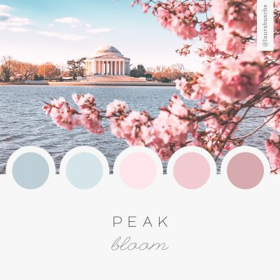 Brand Moodboard: Peak Bloom